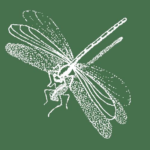 libellula-white